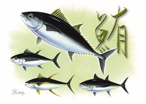魚藏生態藝術 魚藏生態萬用卡 ── 黑鮪